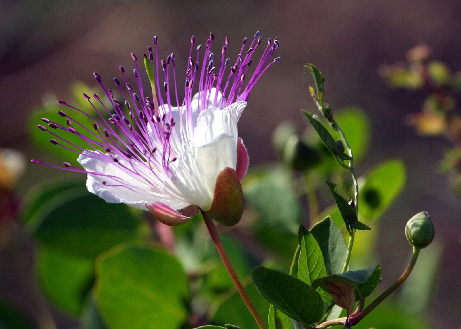 Dammusi-Uliveto-Pantelleria-Cappero