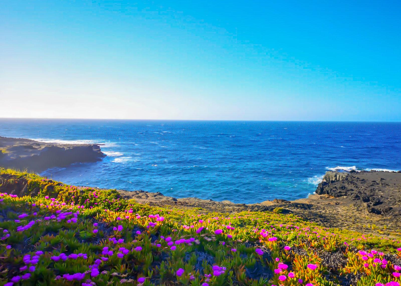 Dammusi-Uliveto-Pantelleria-Isola