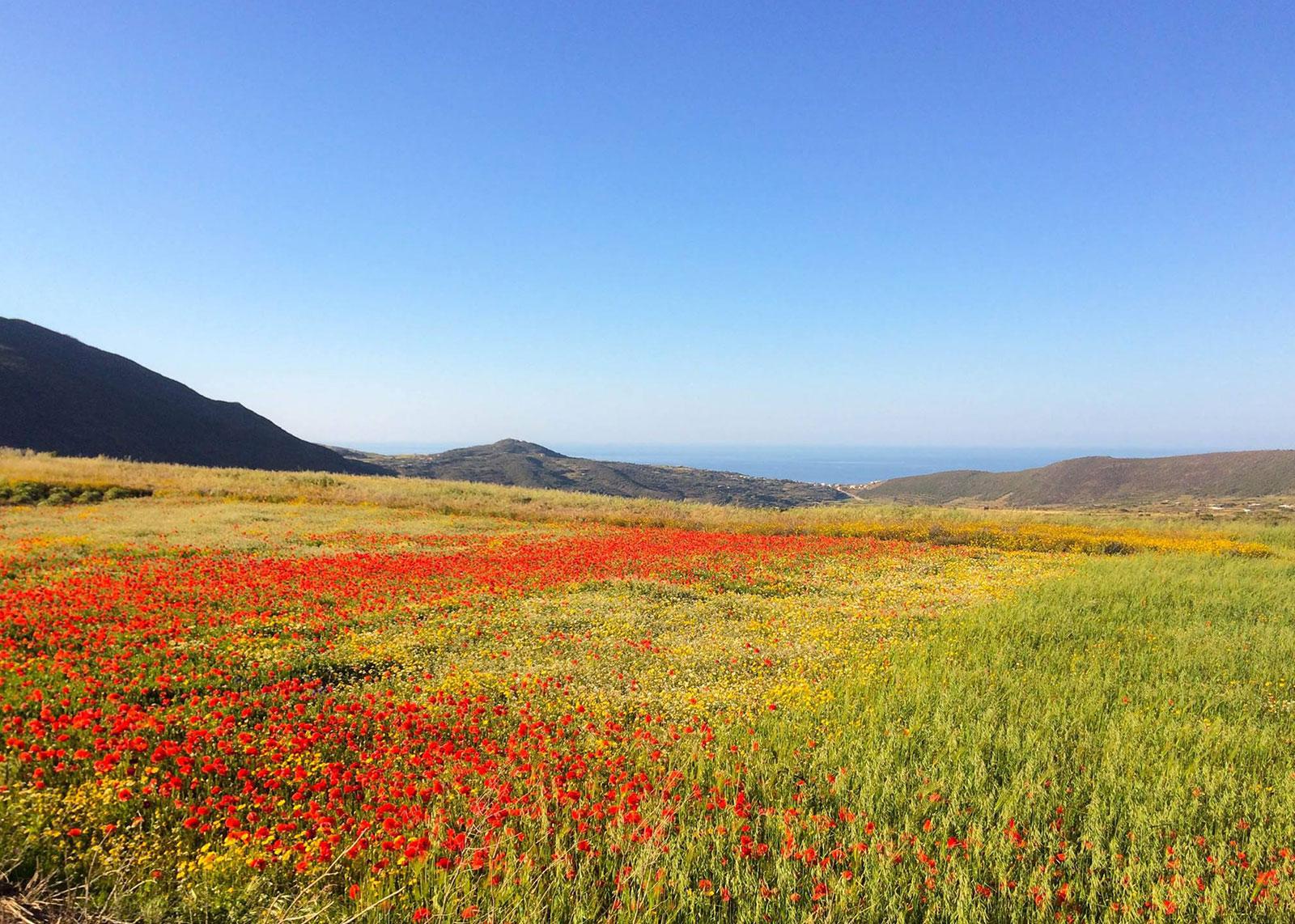 Dammusi-Uliveto-Pantelleria-Sicilia